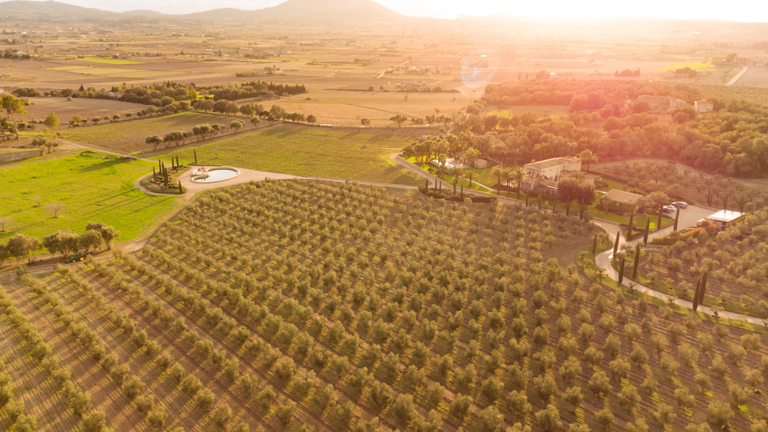 Biodynamic Vinyard Mallorca | Clos de S'Almudaina